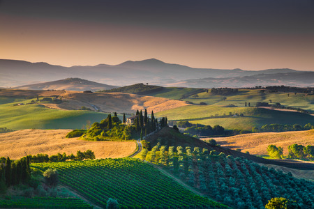 Photo for Scenic Tuscany landscape with rolling hills and valleys in golden morning light, Val d'Orcia, Italy - Royalty Free Image