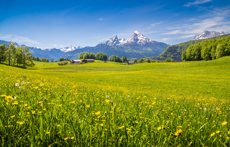 Photo pour Idyllic landscape in the Alps with fresh green meadows and blooming flowers and snow-capped mountain tops in the background - image libre de droit