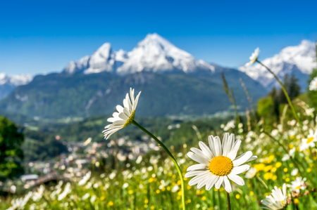 Foto de Artistic view of landscape in the Bavarian Alps with beautiful flowers and blurry Watzmann mountain in the background in springtime, Nationalpark Berchtesgadener Land, Bavaria, Germany - Imagen libre de derechos