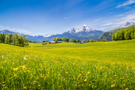 Photo for Idyllic landscape in the Alps with fresh green meadows and blooming flowers and snow-capped mountain tops in the background - Royalty Free Image