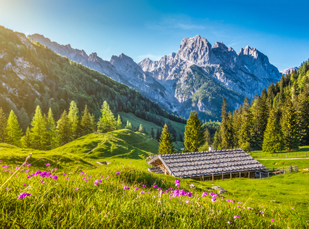 Photo pour Idyllic landscape in the Alps with traditional mountain chalet and fresh green mountain pastures with blooming flowers at sunset, Nationalpark Berchtesgadener Land, Bavaria, Germany - image libre de droit