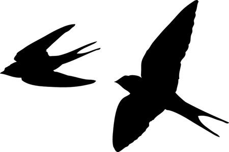 Illustration pour SWALLOWS - image libre de droit