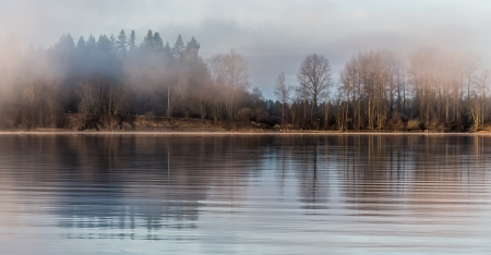 Tree reflected in river on misty morning