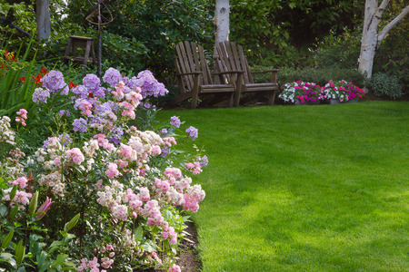 Photo for Clusters of pink and white tea roses by a lush green lawn with two rustic chairs waiting for you in the background. - Royalty Free Image