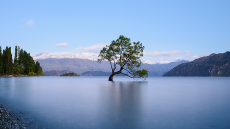 Photo pour That Wanaka Tree - image libre de droit