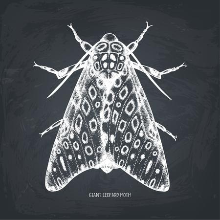 Ilustración de High detailed  of leopard moth. - Imagen libre de derechos