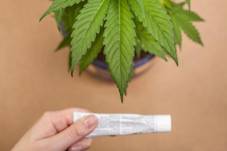 Photo pour Cannabis plant and hand with cream tube. - image libre de droit