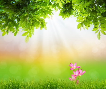 Pink flower on Fresh spring green grass with green leaf , Summer time