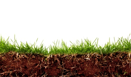 Photo pour Fresh spring green grass with soil isolated on white background. - image libre de droit