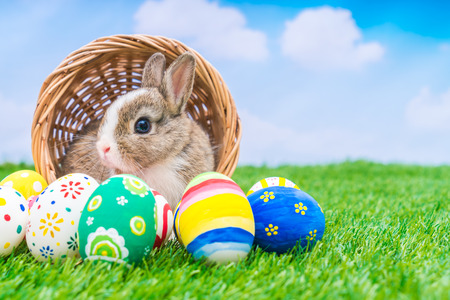 Photo for Rabbit and easter eggs in green grass with blue sky - Royalty Free Image