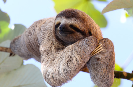 Photo pour Happy Sloth - image libre de droit