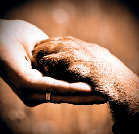 Photo for Dog´s paw and man´s hand best friends - Royalty Free Image