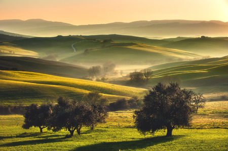 Photo pour Tuscan fields and olive trees at sunrise in a mystical fog - image libre de droit