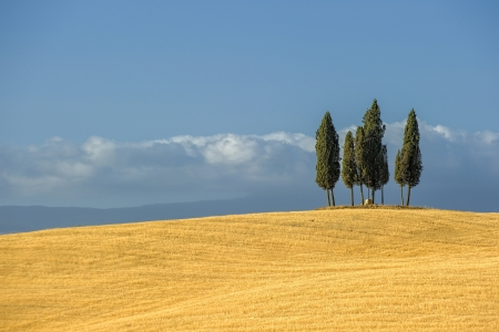 Photo pour image of typical tuscan landscape - image libre de droit