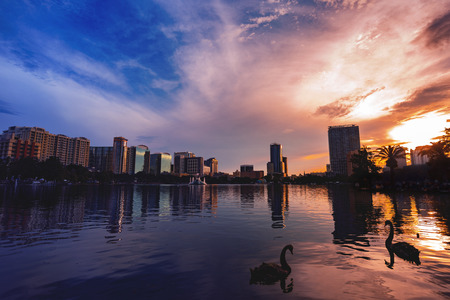 Photo pour Swans in the water and  a dramatic sunset in Lake Eola Orlando Florida. - image libre de droit