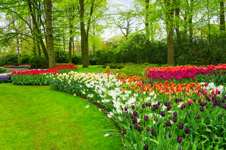 Foto de Beautiful spring flowers in Keukenhof park in Netherlands (Holland) - Imagen libre de derechos