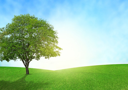 Photo pour Green field, blue sky and tree lighting flare on grass. - image libre de droit