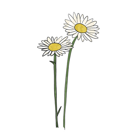 Illustration pour Hand drawn daisy flower, vector. - image libre de droit