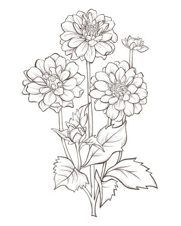 Illustration pour dahlia  flower  isolated on white background. - image libre de droit