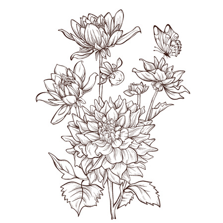 Illustration pour Vector dahlia flower isolated on white background with butterfly.  Element for design. Hand-drawn contour lines and strokes. - image libre de droit