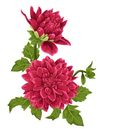 Ilustración de Flower isolated. Dahlia. - Imagen libre de derechos