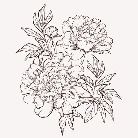 Illustration for Spring peony flowers. - Royalty Free Image