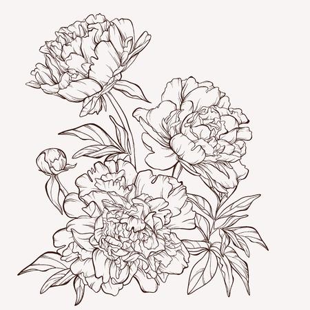 Illustration pour Blossoming peony flowers on white. - image libre de droit