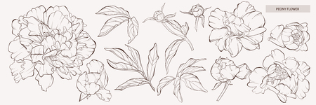 Illustration for Sketch Floral Botany Collection. Vector peony flower Peony flower and leaves drawing. Vector hand drawn engraved floral set. Botanical rose, branch and berry Black ink sketch. Great for tattoo, invitations, greeting cards, decor. - Royalty Free Image