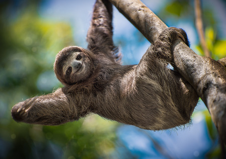 Photo for Happy Sloth - Royalty Free Image