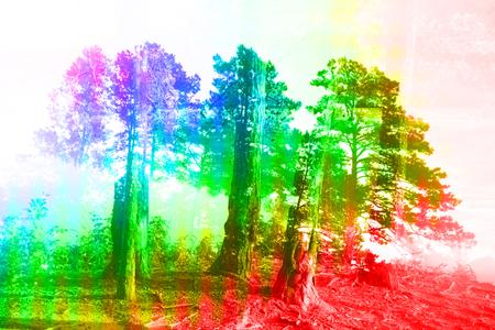 Foto de A colorful abstract background image of a coniferous forest. - Imagen libre de derechos