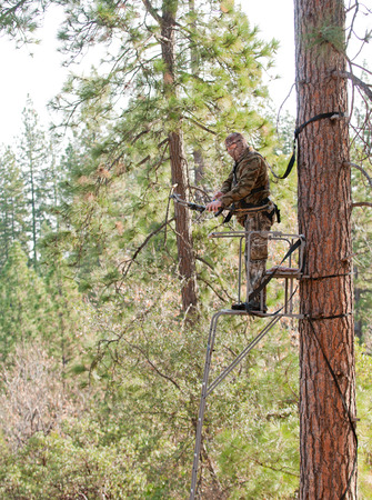 Bow hunter in a ladder style tree stand preparing to shoot