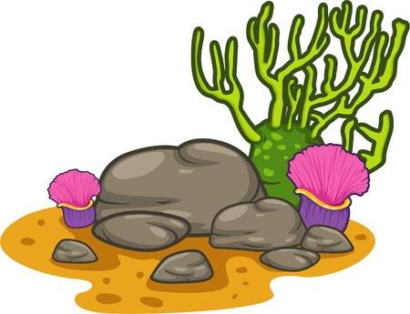 illustration coral