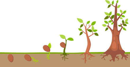 Illustration pour Tree life cycle vector - image libre de droit