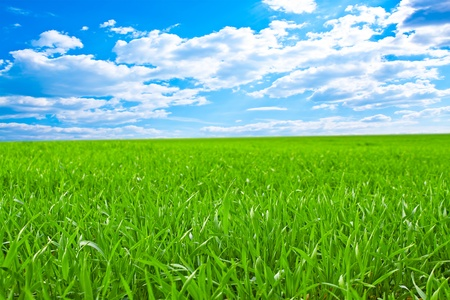 Photo pour Beautiful field with a green grass and the beautiful sky on horizon with fluffy clouds - image libre de droit