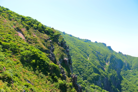 Photo for It is the spring landscape of Hanla mountain in Jeju. - Royalty Free Image