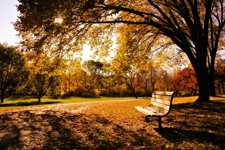 Bench in a park in late day autumn light