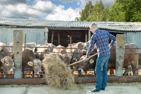Photo for man working on farm cattle on a sunny day - Royalty Free Image