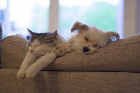 cat and dog sleeping beside eachother