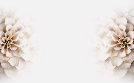 Photo pour  Background of white flowers copy-space - image libre de droit