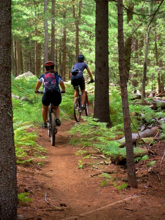 Two mountain bikers hiking a hill in the forest
