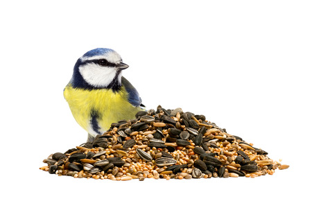 Photo pour Blue tit and a pile of mixed bird seeds on white background - image libre de droit