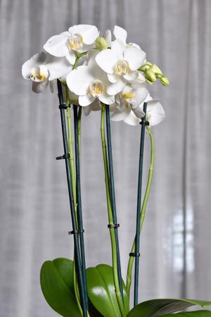 Photo pour white orchid - image libre de droit