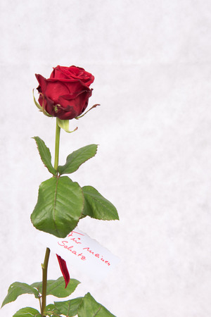 Photo pour Rose for Valentine \ 's day with badge in German - image libre de droit