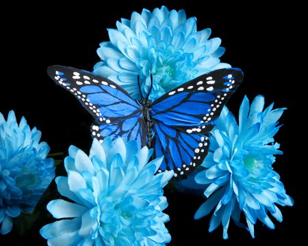 Photo for Blue carnations and butterfly - Royalty Free Image
