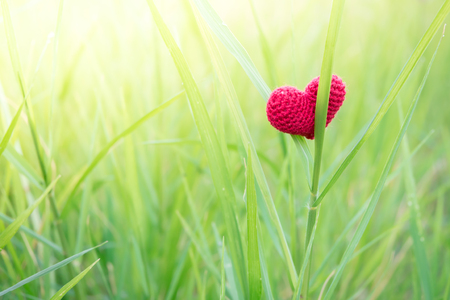 Photo for Alone Red heart in everywhere. - Royalty Free Image