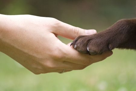 Friendship between human and animal - puppy give woman paw - handshake