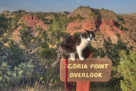 Foto de Luna the Adventure Kitty is a feline explorer who travels the midwest and beyond looking for new things to see and new places to visit. - Imagen libre de derechos