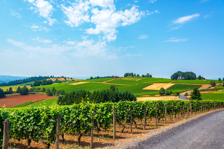 Photo pour Hills covered in vineyards in the Dundee Hills in Oregon wine country - image libre de droit