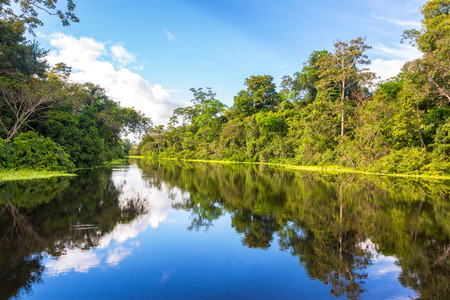 Photo for Amazon rain forest perfectly reflected in a small river near Iquitos, Peru - Royalty Free Image