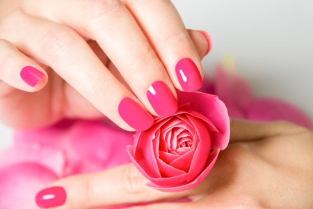 Photo pour Close Up of Female Hands Wearing Bright Pink Polish on Nails and Holding Small Rose with Scattered Rose Petals on White Surface in Background - image libre de droit
